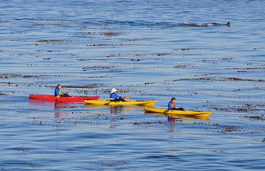 Canoe, Water, Oar, Kayak, Boat