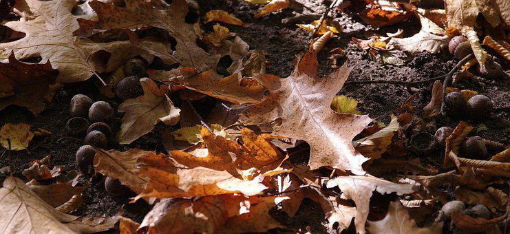 Autumn, Leaf, Nature, Wood, Season, Environment, Plant