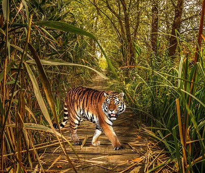 Nature, Animal World, Mammal, Jungle, Grass, Thicket