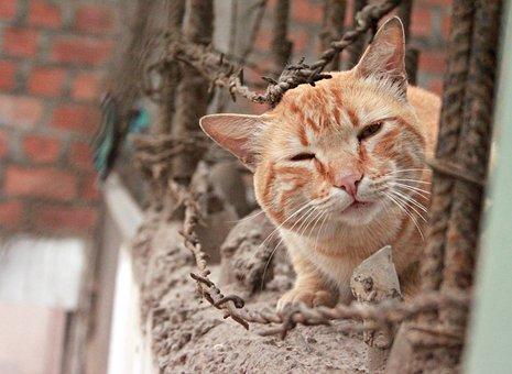 Cat, Animalia, Portrait, Nice, Nature, Curiosity, Look