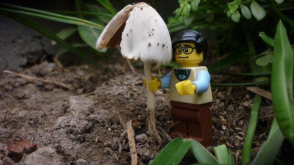 Nature, Outdoors, Small, Lego, Fungus, Mushroom