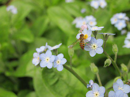 Hoverfly, Fly Bee, Nature, Flower, Plant, Leaf, Garden
