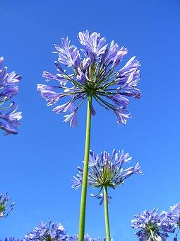 Flower, Ball, Violet, Long, Rod, Sky, Blue, Nature