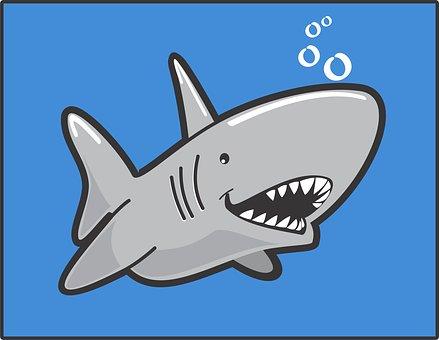 Closeup, Kill, Shark, Tropical, White, Sharp, Life