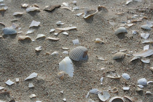 Sand, Beach, Nature, Coast, Sea, Shell, Sink