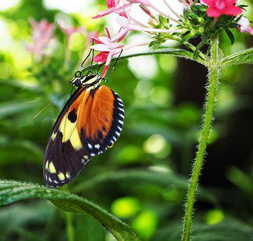 Butterfly, Insect, Nature, Flower, Summer, Garden, Leaf