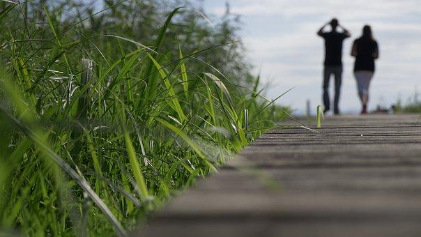 Nature, Panorama, Plant, Grass, Travel, Summer, Sky