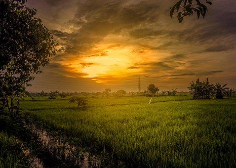 Field, Twilight, Padi, Sunrise