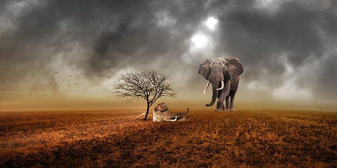 Elephant, Animal, Animals, Elephant Head, Ivory