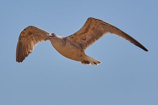 Bird, Nature, Animal World, Flight, Wing, Fly, Seagull