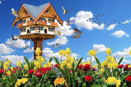 Emotions, Spring, Nature, Animals, Birds, Flowers