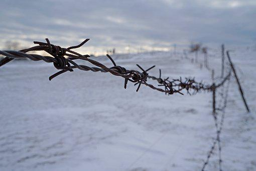 Winter, Frost, Nature, Snow, Barbed Wire