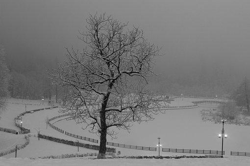 Winter, Tree, Landscape, Fog, Snow, Nature, Cold