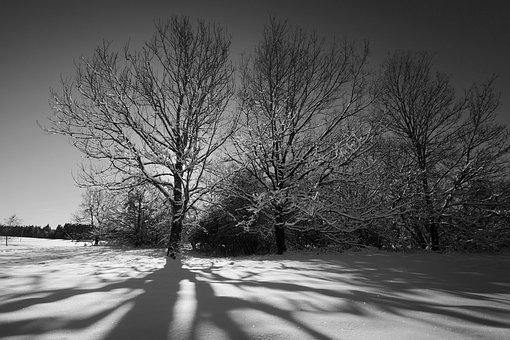 Tree, Winter, Landscape, Frozen, Fog, Light, Shadow