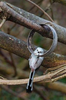 Nature, Animal, Bird, Long Tailed Tit, Animal World