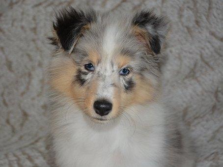 Dog, Pup, Dog Portrait, Female, Dog Island Bounty