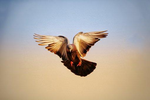 Bird, Sky, Flight, Fly, Wildlife, Nature, Wing, Freedom