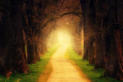 Tree, Light, Secret, Wood, Nature, Away, Path, Trail