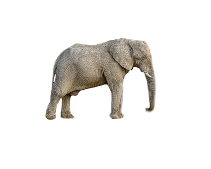 Elephant, Animal, Africa, Transparent Background