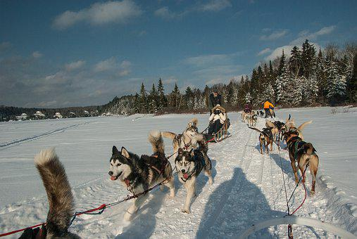 Winter, Snow, Sled Dogs, Husky