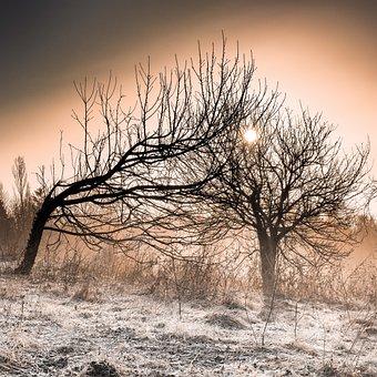 Tree, Landscape, Nature, Dawn, Winter, Frost