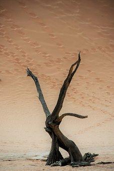 Sand, Nature, Africa, Namibia, Sossusvlei, Tree