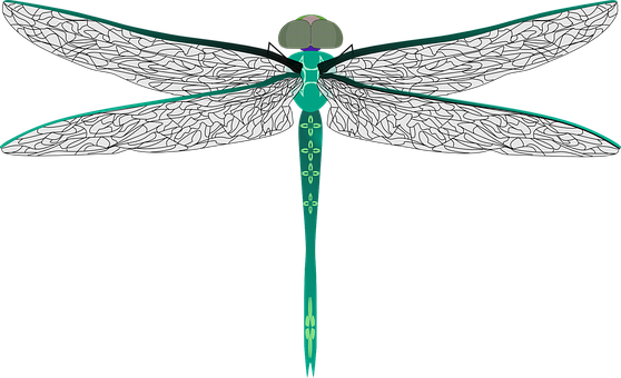 Dragonfly, Bug, Insect, Darning Needle