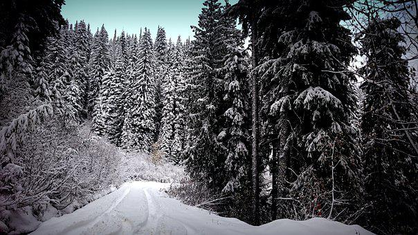 Snow, Winter, Wood, Cold, Frost, Landscape, Nature