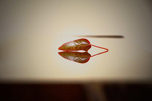 Nature, Leaf, Desktop, Closeup, Light, Blur, Reflection