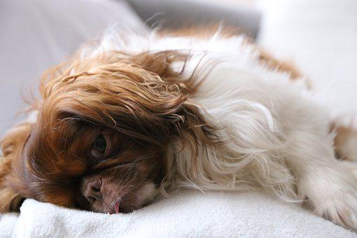 Dog, Cute, Pet, Puppy, Animal, Relax, Sunday, Sleeping