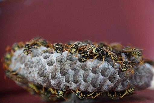 Nature, Close, Animal, Insect, Field Wasp, Wasp