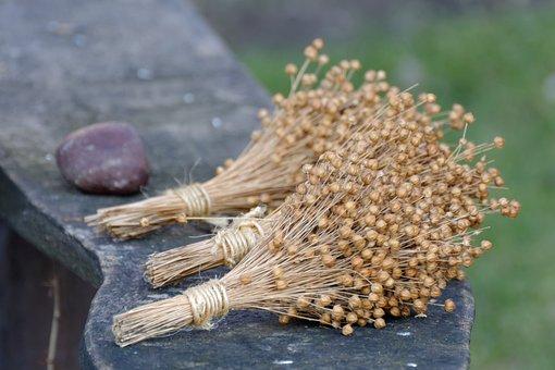Flax, Linen, Bouquet, Flax Seeds, Nature, Natural