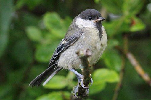 Bird, Living Nature, Nature, Outdoors, Animals, Beak
