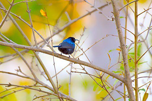 Bird, Wildlife, Nature, Tree, Outdoors, Wing, Park