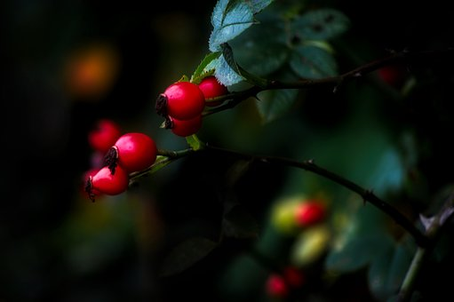 Berries, Leaf, Nature, Tree, Outdoors, Red, Plant