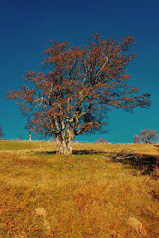 Tree, Landscape, Nature, Season, Autumn, Plant, Bright