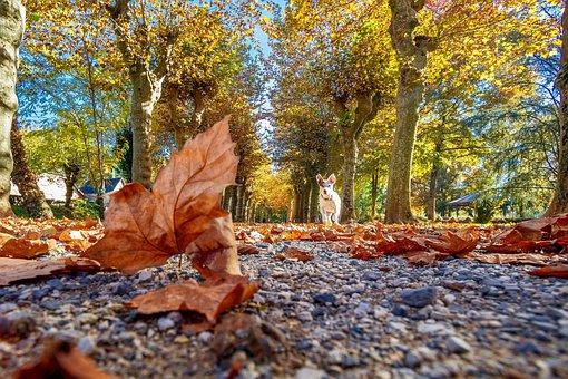 Autumn, Sheet, Nature, Season, Park, Outdoor