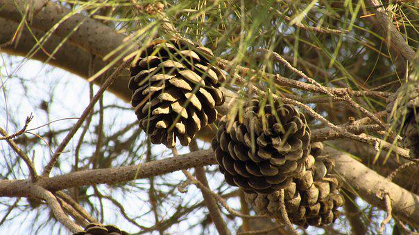 Tree, Nature, Wood-fibre Boards