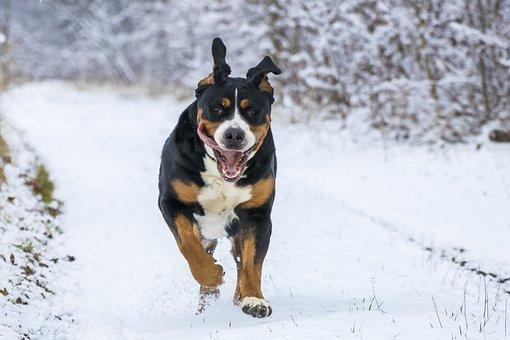 Snow, Big Dog, Gear