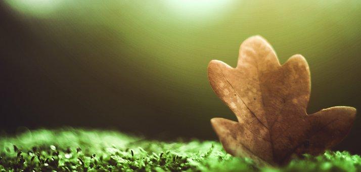 Letter, Ticket, Forest, Autumn, Priroda, Grass, Trees