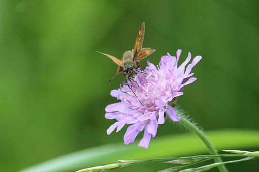 Nature, Flower, Summer, Plant, Insect, Grass