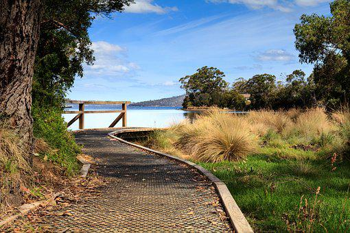 Nature, Tree, Wood, Landscape, Grass, Australia