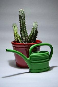 Cactus, Plant, Pot, Nature, Leaf, Flower, Color, Thorn