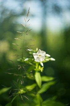 Nature, Plant, Flower, Sheet, Garden, Spring, Leaves