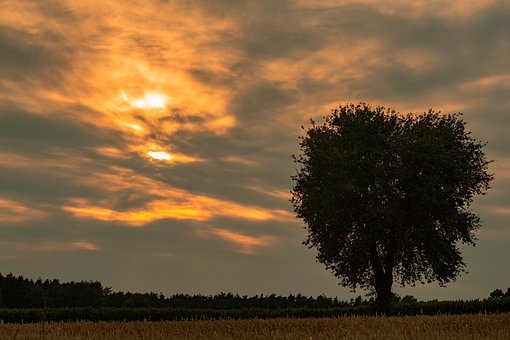 The Dawn Family, Sunset, No One, Tree, Nature, Village