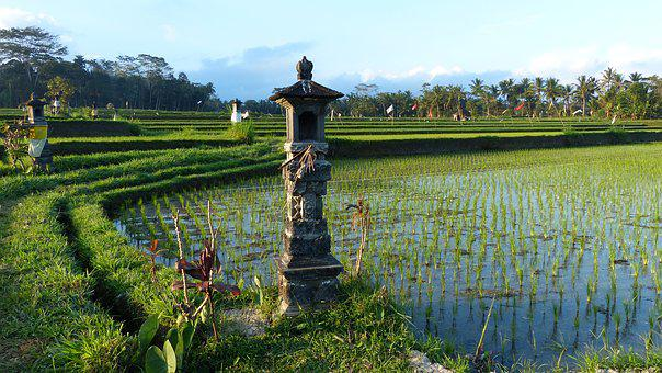 Water, Nature, Agriculture, Outdoors, Field, Bali