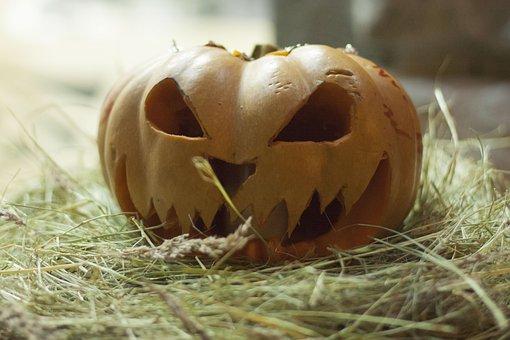 Nature, Food, Vegetable, Pumpkin, Trick, Treat, Night