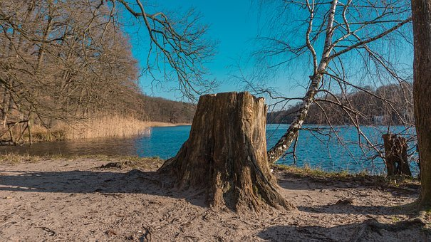 Nature, Waters, Tree, Landscape, Sky, Scenic, Wood