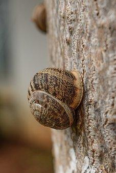Snail, Tree, Nature, Closeup, After Rain, Animal