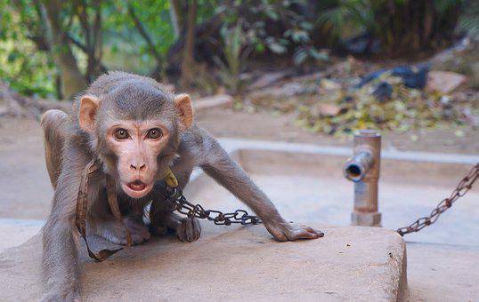 Nature, Wood, Monkey, Wildlife, Mammal, Animal